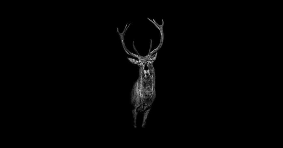 """31.mai.2016 - Cada retrato foi colocado diante de um fundo preto, para ressaltar o lado """"íntimo e ousado de cada animal"""""""