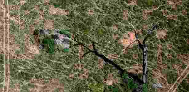 Árvore seca em meio a pasto em Novo Progresso, no Pará. Desmatamento ilegal foi flagrado pelo Ibama na região  - Vinícius Mendonça/Ibama