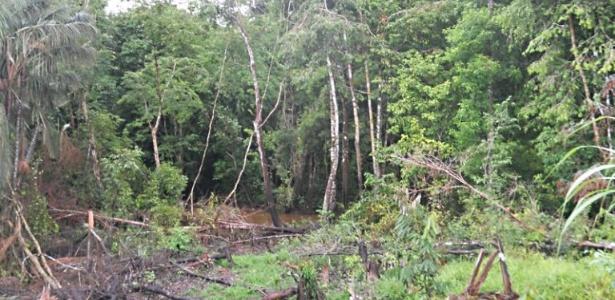 Maior incidência de malária está associada a áreas de floresta nativa devastadas com menos de 5 km2 de extensão