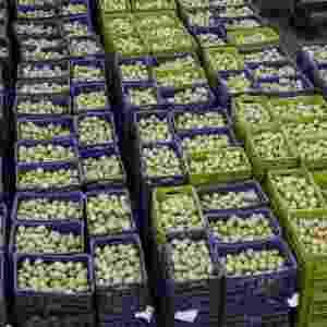 Produtos podem chegar no mesmo dia na fábrica da Nestlé - Marcelo Pereira/UOL