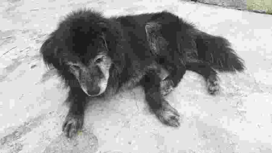 Snoopy foi encontrado pela família dez anos após ter fugido de casa - Reprodução/Facebook