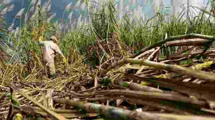 Decreto gerou resistência entre os produtores de cana do Brasil - Getty Images - Getty Images