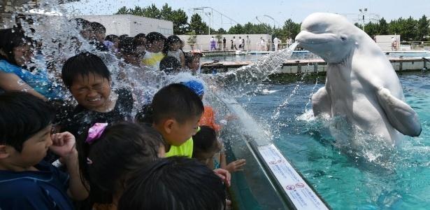 Baleia-branca espirra água em visitantes em apresentação em aquário de Tóquio - Toshifumi Kitamura/AFP