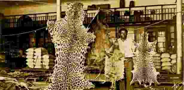 Peles de onça, lontra gigante, lontra neotropical e jaguatirica em um curtume de Manaus na década de 1950 - Biblioteca Virtual do Instituto Brasileiro de Geografia e Estatística (IBGE)