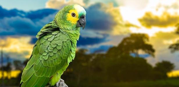 Papagaio, pássaro, ave