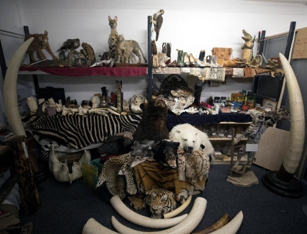 28.dez.2017 - O armazém do aeroporto de Heathrow, localizado no oeste de Londres, está repleto de animais ameaçados de extinção empalhados