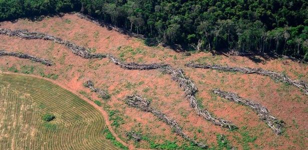 Perdão a desmatamentos cometidos até 2008 está entre os pontos mais polêmicos do Código Florestal, que tem dispositivos questionados no STF