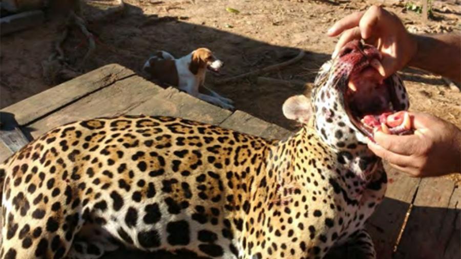 Grupo de caçadores do Acre é alvo de denúncias