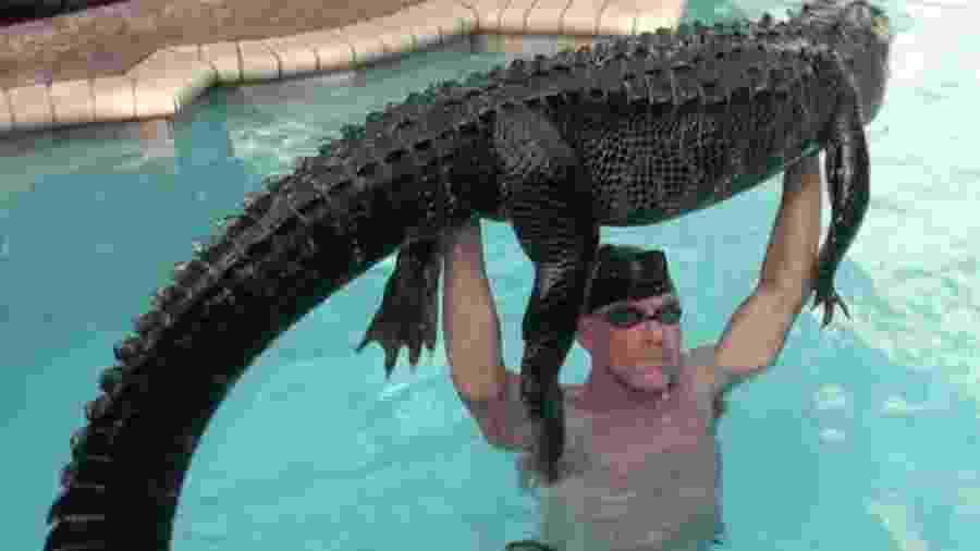 Jacaré-norte-americano (ou aligátor) de 90 kg é retirado de piscina na Flórida (EUA) - Instagram/gatorboysalligatorrescue