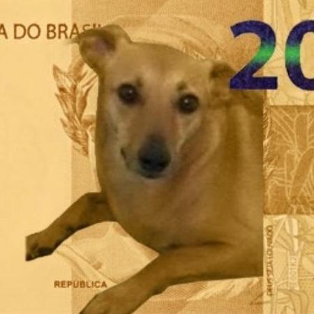 Usuários também acharam que o vira-lata caramelo representaria melhor o Brasil que o lobo-guará - Reprodução/Twitter