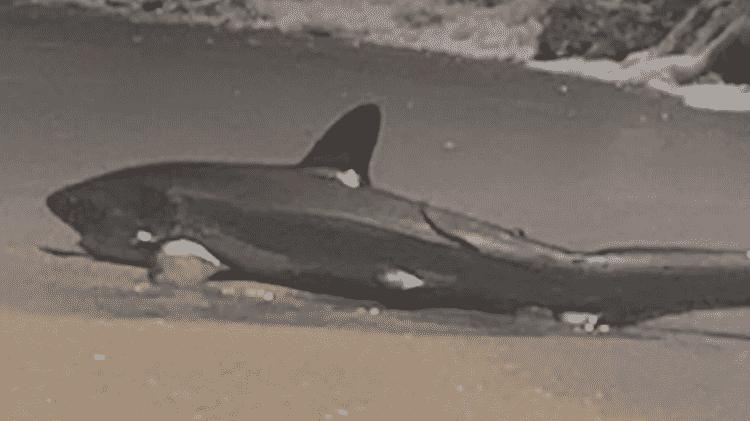 tubarão - Reprodução/YouTube - Reprodução/YouTube