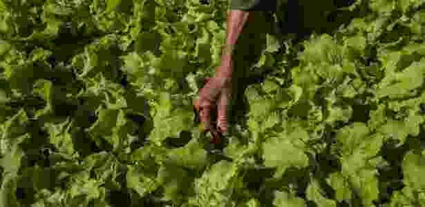 alimentos cuba nyt 2 - Mauricio Lima/The New York Times - Mauricio Lima/The New York Times