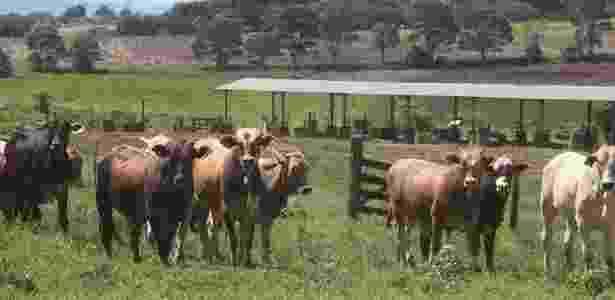 Área de pastagem em propriedade de criação de gado em Peabiru, na região centro-oeste do Paraná - Dirceu Portugal/Foto Arena/Estadão Conteúdo