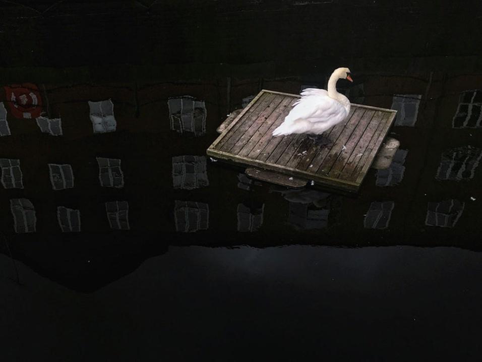 Foto tirada por Dongrui Yu com um iPhone 6s Plus. A imagem levou o 2º lugar na categoria animais