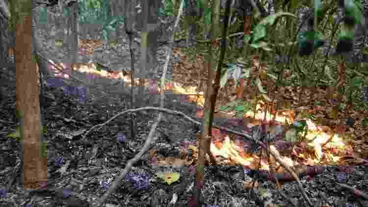 Incêndios florestais na Amazônia são feitos de fogos bem pequenos, com chamas de 30 cm de altura que se movem muito devagar durante dias e dias de queima - Erika Berenguer/Divulgação - Erika Berenguer/Divulgação