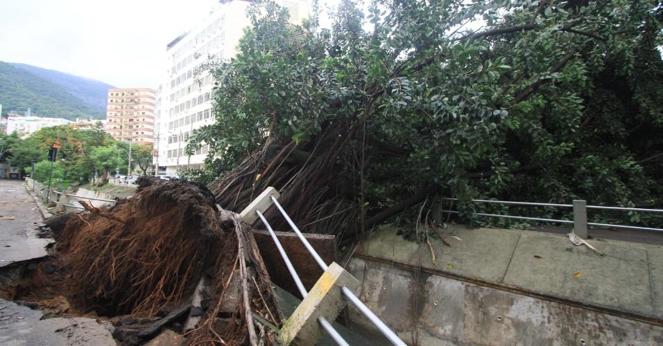 15.fev.2018 - Árvore cai na Avenida Maracanã, na Tijuca, no Rio de Janeiro (RJ), em frente à Escola Municipal Soares Pereira, após forte chuva que atingiu a cidade durante a madrugada desta quinta-feira