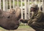 Espécie de rinoceronte que só tem mais dois animais pode ser salva da extinção por fertilização in vitro - OI Pejeta/Divulgação