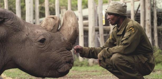 Resultado de imagem para Morreu o último rinoceronte-branco-do-norte macho