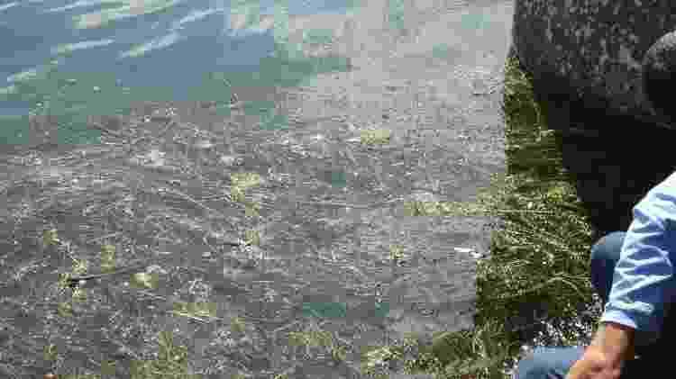 Pesca e navegação foram afetados com a quantidade de plantas no rio São Francisco - Companhia de Saneamento de Alagoas