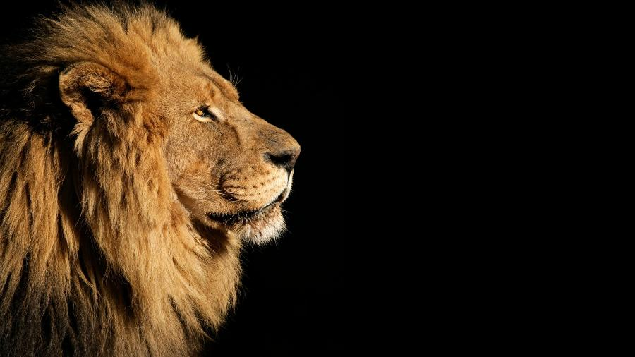 Leão, Imposto de Renda, IR - iStock