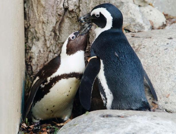 """DIÁRIO SEXUAL FOI CENSURAD - O médico e biólogo George Murray Levick, que observou o comportamento dos pinguins entre 1910 e 1913, escreveu um diário da vida sexual desses animais que foi considerado """"depravado"""" na época. Os escritos não foram publicados por conterem relatos de """"coerção sexual, abuso sexual e físico de filhotes, sexo sem fins de procriação e comportamento homossexual"""""""