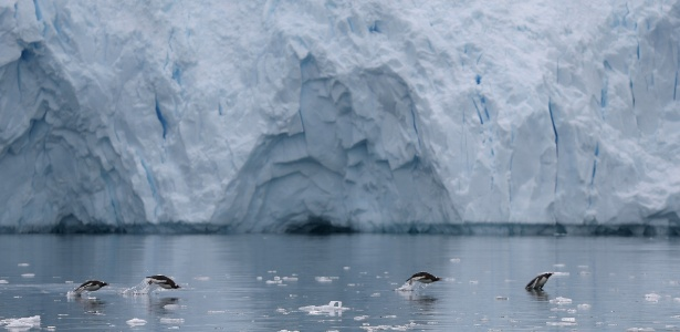 16.fev.2018 - Pinguins nadam em uma geleira perto de Neko Harbour, Antártida