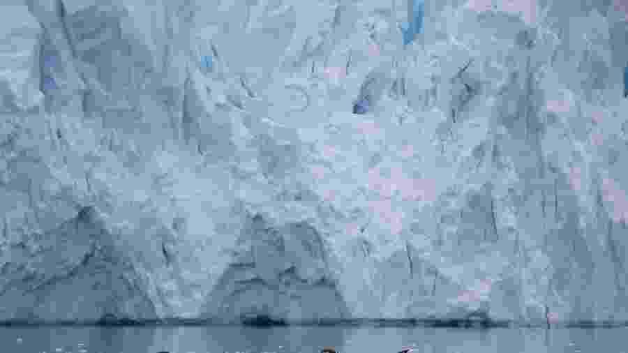 16.fev.2018 - Pinguins nadam em uma geleira perto de Neko Harbour, Antártica - REUTERS/Alexandre Meneghini