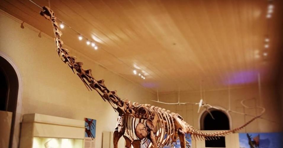 """Esqueleto de dinossauro na exposição """"No Mundo do Maxakalisaurus"""", no Museu Nacional"""