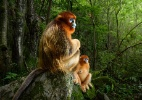 De macacos em extinção a dunas esculpidas pelo vento, 10 imagens vencedoras do Wildlife Photographer of the Year (Foto: Marsel Van Oosten/WPY)