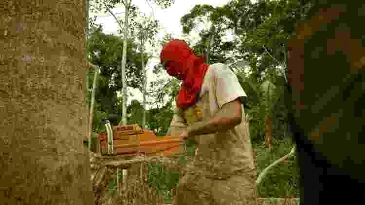 Madeireiro corta árvore com motosserra - BBC - BBC