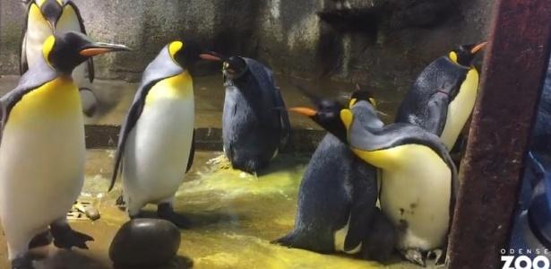 pinguim gay