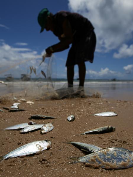 Pescadores catam sardinhas na praia da Espera em Itacimirim, na Bahia - Raul Spinassé/Folhapress