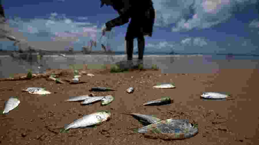 Pescadores catam sardinhas na praia da Espera em Itacimirim, na Bahia; chegada do óleo e a incerteza sobre os efeitos nos peixes e frutos do mar têm afetado a venda de pescados na região - Raul Spinassé/Folhapress
