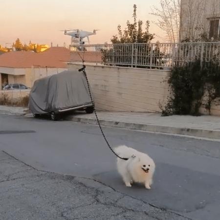 Resultado de imagem para drone leva cachorro pássear