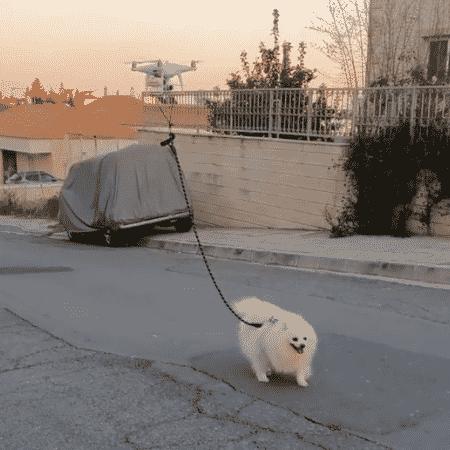 Drone levou cachorro para passear - Reprodução