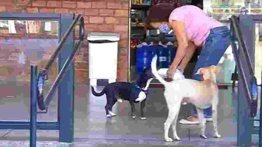 Cachorro Juquinha - Reprodução/TV Tem