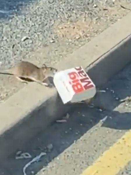 """Cena do rato com o """"Big Mac"""" no Reino Unido - Reprodução/Twitter"""
