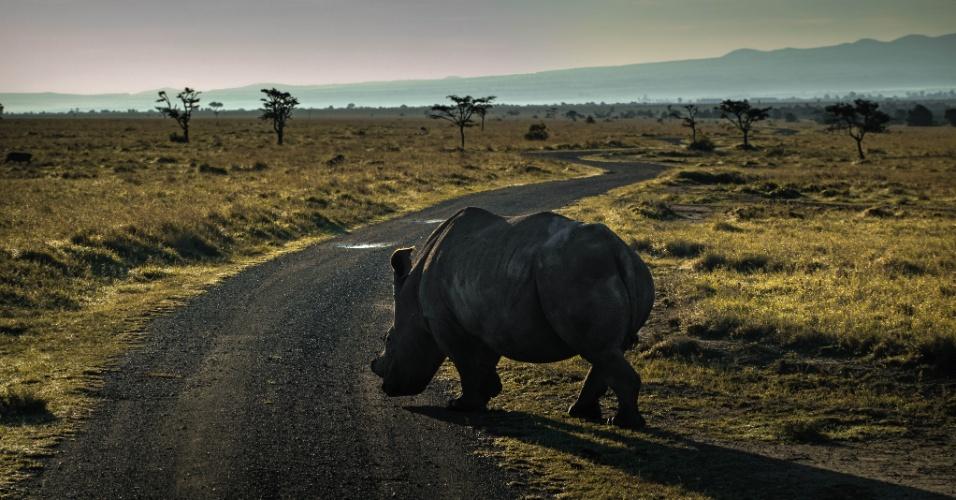 """24.mar.2016 - Um rinoceronte-branco caminha pelo Quênia. Esta é a última imagem do livro """"A Jornada do Rinoceronte"""", do fotógrafo Érico Hiller que visa mostrar a atual situação dos rinocerontes pelo mundo. De acordo com a ONG Save The Rhino, os animais podem ser extintos até 2026. """"Não é um livro sobre as belezas do rinoceronte, mas sobre o que as pessoas estão dispostas a fazer para matar o animal e depois vender partes de seu corpo no mercado negro"""", afirma Hiller"""