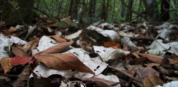 Folhas em estado de decomposição produzem óxido nitroso, um tipo de gás do efeito estufa mais potente que o dióxido de carbono