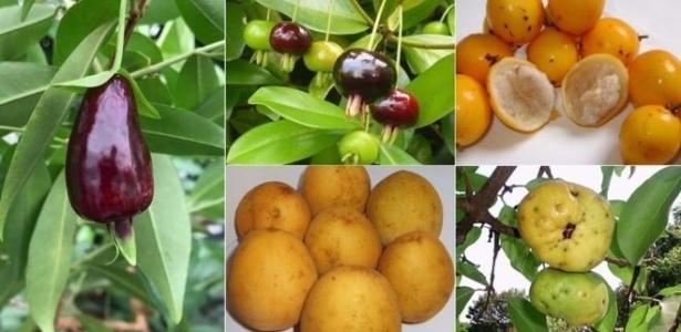 """No sentido horário, grumixama, bacupari-mirim, ubajaí, araçá-piranga e cereja-do-rio-grande, candidatas a novas """"superfrutas"""", segundo cientistas"""