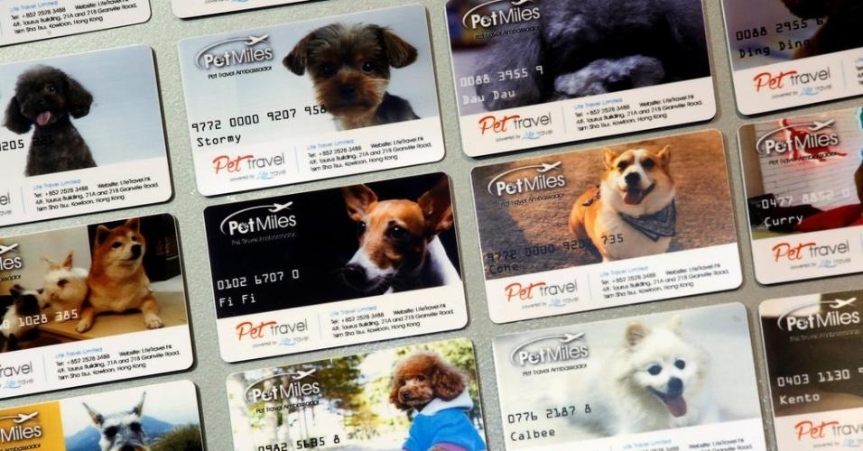 Voos de luxo para cães - cartões dos membros das milhas de pets