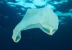 Os oceanos estão ficando sem oxigênio, e a culpa é nossa - Getty Images
