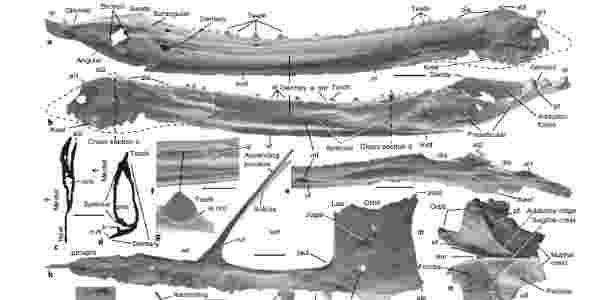Na imagem, ossos do fóssil de pterossauro encontrado em Utah, nos EUA - Nature/Brooks B. Britt et. al