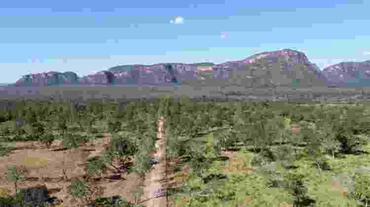 Paisagem do Cerrado; Para Rittl, a visão dos vários membros do governo sobre o meio ambiente é a mesma - GETTY IMAGES - GETTY IMAGES