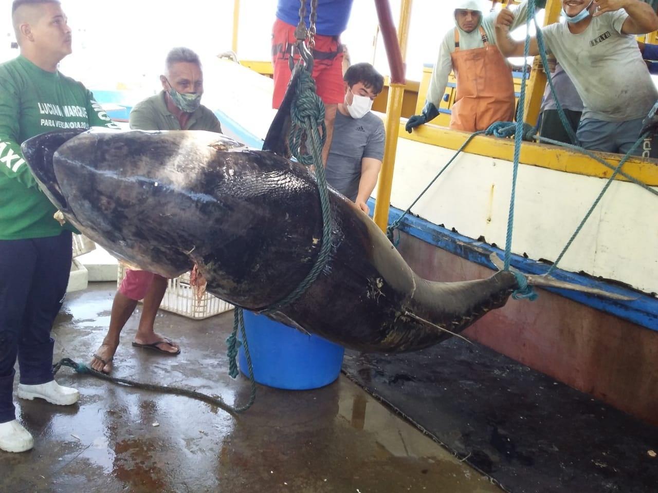 Pescadores fisgam atum de R$ 140 mil, mas detalhe faz perderem bolada