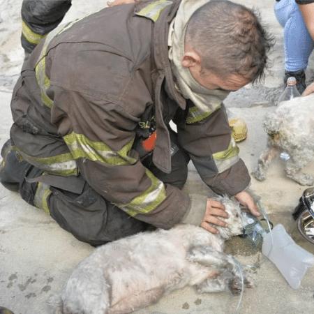 Um dos cachorros resgatados teve que receber oxigênio, mas passa bem - Divulgação/Júlio Leite