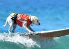 Destemidos, cães entram no mar e participam de campeonato de surfe nos EUA - Frederic J. Brown/ AFP