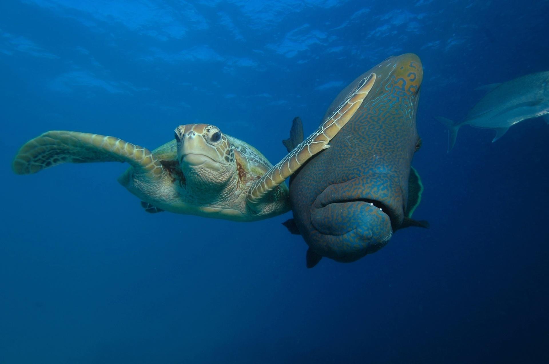 Tartaruga espaçosa - Essa tartaruga deu um tapa na cara de um peixe que passava ao seu lado no mar de Bacong, nas Filipinas. Foi a vencedora na categoria especial