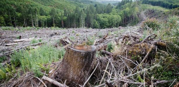 Floresta é desmatada ao longo de uma estrada perto de Portland, nos Estados Unidos. As florestas privadas compõem mais da metade das terras de florestas do país e podem ser potentes armas contra as mudanças climáticas