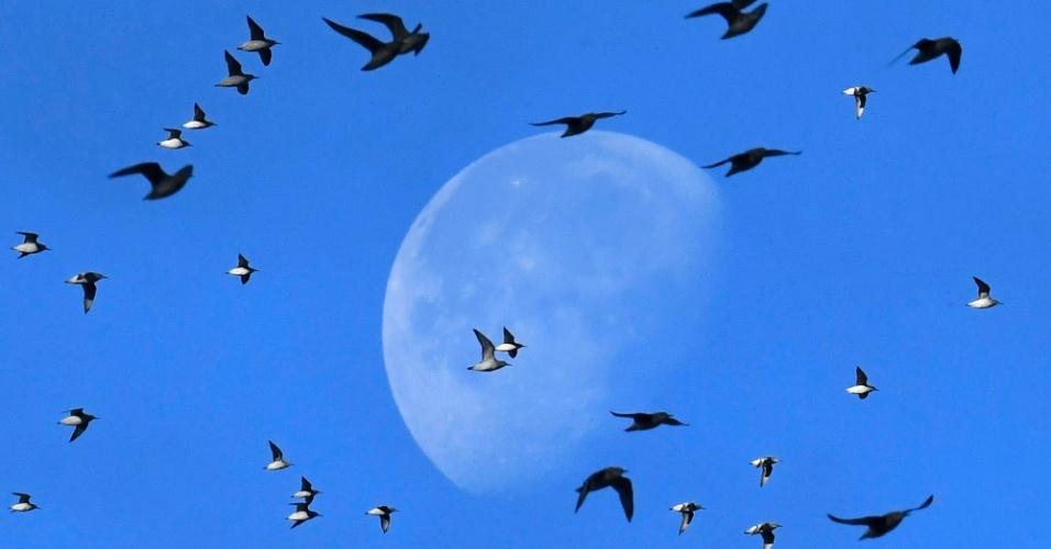 20.out.2016 - Bando de pássaros marinhos passa na frente da lua enquanto voam sobre o litoral perto da costa de Snettisham em Norfolk (Grã-Bretanha)